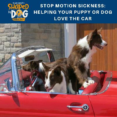 Stop Motion Sickness: Helping Your Puppy or Dog Love the Car