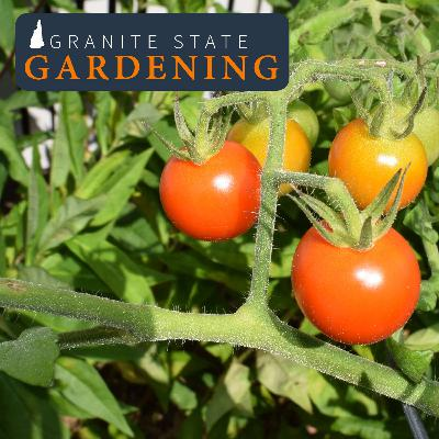 Planning Spring Vegetable Gardens (part 2), Container Gardening, Malabar Spinach & Staking Tomatoes