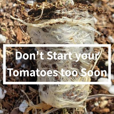 Don't Start your Tomatoes too Soon!