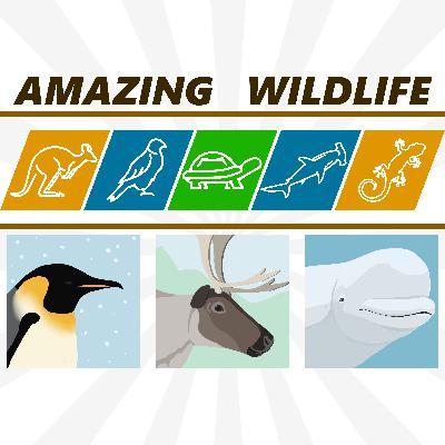 Emperor Penguin | Reindeer | Beluga Whale