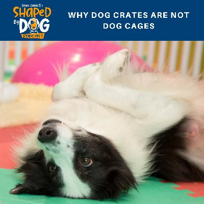 Why Dog Crates Are Not Dog Cages