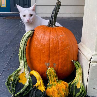 Episode 12 Pumpkins and Gourds