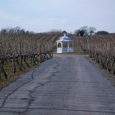 Episode 113: Long Island Wine