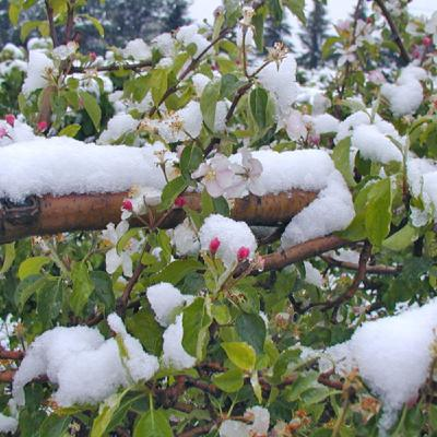Season 2 Episode 1: Winter Injury and Cold Hardiness