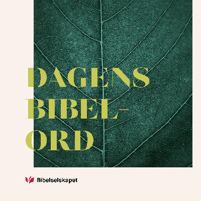 Dagens bibelord 7/5/2021 - Ef 3,14–21