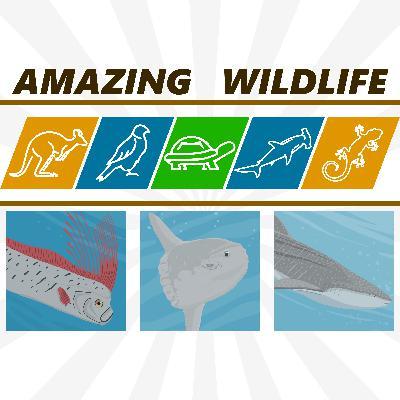 Giant Oarfish | Mola Mola | Whale Shark