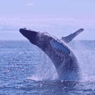 The Amazing Life of Whales