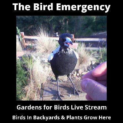 Bonus - Creating and Maintaining a Garden for Birds (and Wildlife)