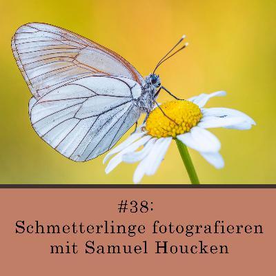 Schmetterlinge fotografieren - mit Samuel Houcken