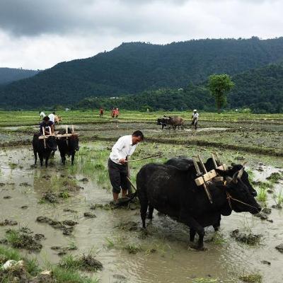 (पोखरा समाचार) Pokhara News: June 30, 2020 #covid19