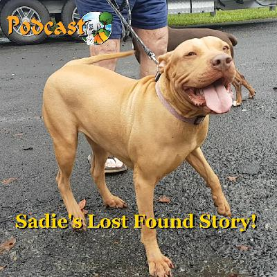 Sadie...Lost Then Found! - Babinda FNQ