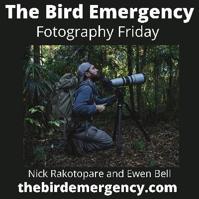 049 Fotography Friday with Nicolas Rakotopare
