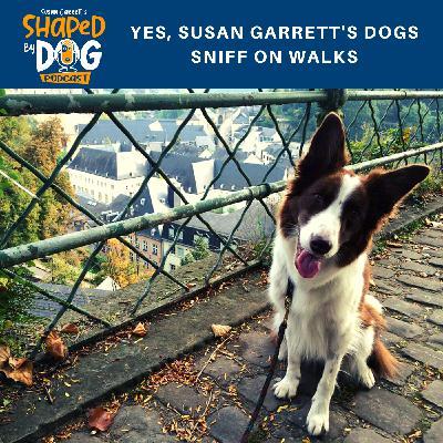 Yes, Susan Garrett's Dogs Sniff On Walks