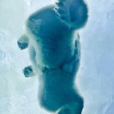 En isbjörns A-hål