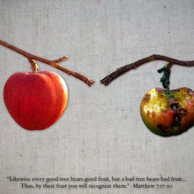 """""""You will know them by their fruits"""" - Trinity 8 - August 2, 2020"""