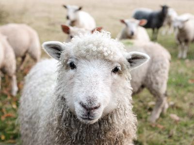 When I am the lost sheep, it makes all the difference