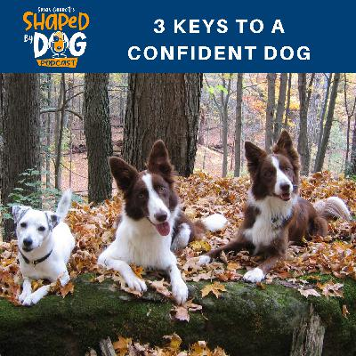 3 Keys to a Confident Dog