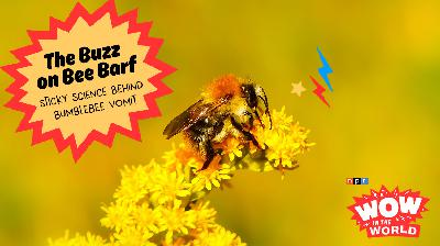 The Buzz on Bee Barf! Sticky Science Behind Bumblebee Vomit