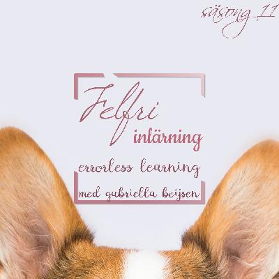Felfri inlärning - Errorless learning
