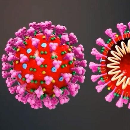 Coronavirus : Aspects Scientifiques & Conseils Immunité