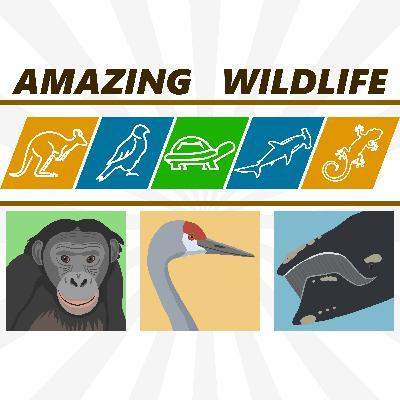 Bonobo | Sandhill Crane | Right Whale