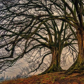 Die heiligen Bäume