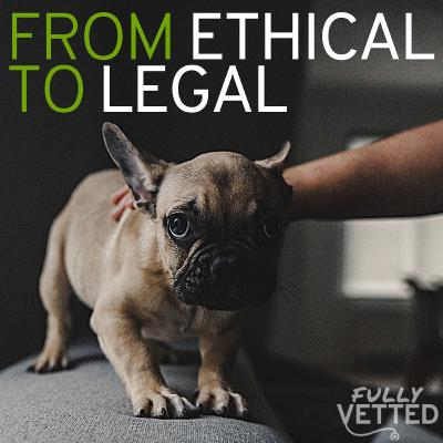 27. Reporting Animal Abuse: From Ethical Responsibility to Legal Requirement