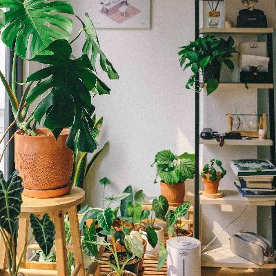 570 - Bons hábitos: plantas e jardinagem, em inglês!