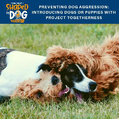 Preventing Dog Aggression: Introducing Dogs or Puppies with Project Togetherness