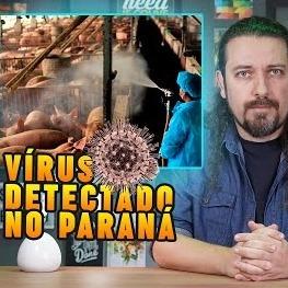 Brasil: vírus com potencial pandêmico saiu de porcos e infectou uma mulher no Paraná