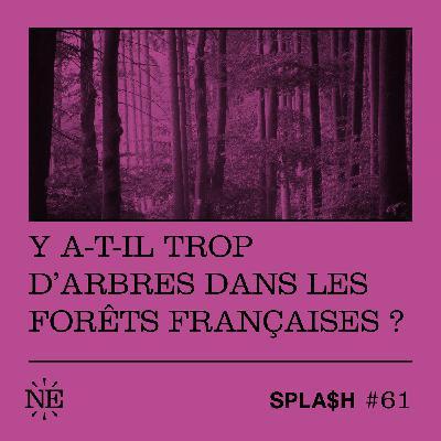 Y-a-t-il trop d'arbres dans les forêts françaises ?