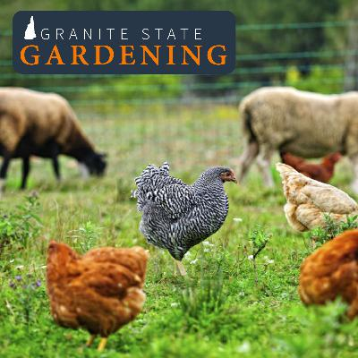 Supporting Animals and Sustaining the Land in the Backyard and on the Homestead