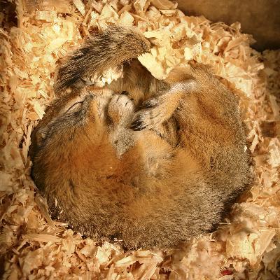 WILD BITES: How can arctic squirrels help us get to Mars?