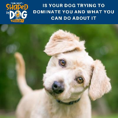 Is Your Dog Trying to Dominate You and What You Can Do About It
