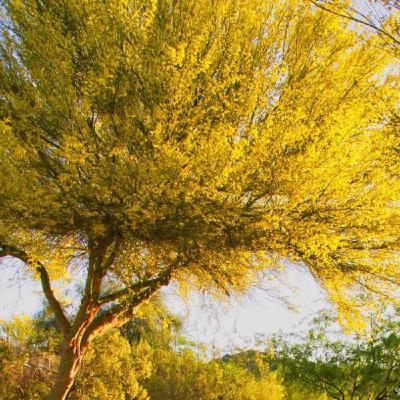 Your Garden vs. The Heat. Regional Water Authority. The Palo Verde Tree.
