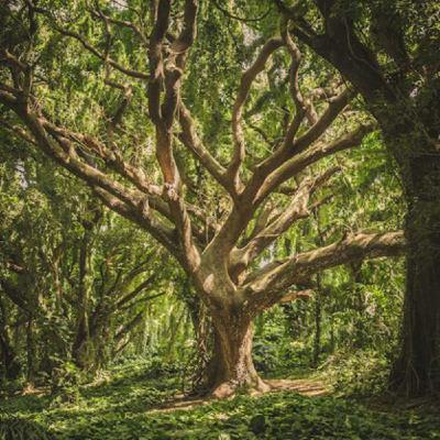 La Ciudad Secreta 71 – El lenguaje secreto de los árboles
