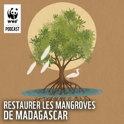 Préserver les mangroves de Madagascar