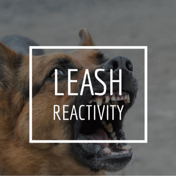 Leash Reactivity