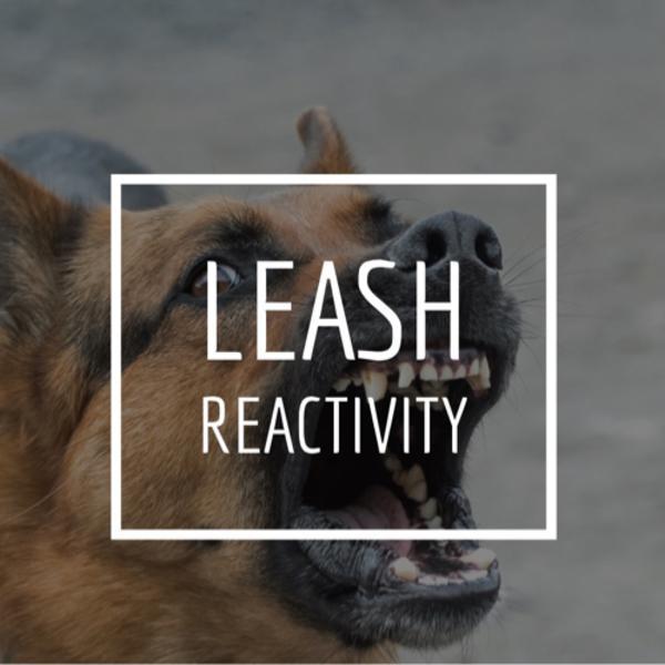 Leash Reactivity